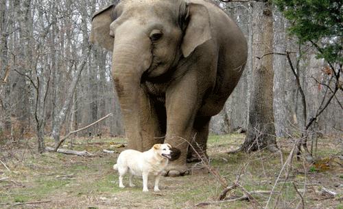 Δύο αχώριστοι φίλοι...