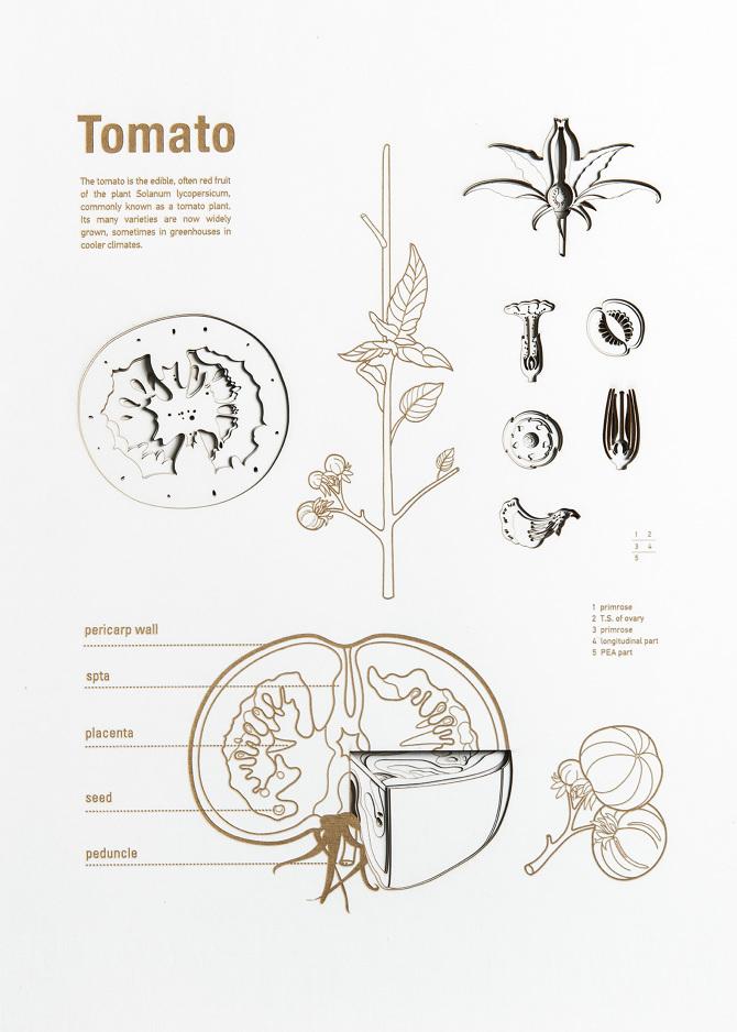 Vegetable Anatomy Posters - hongwei - Personal network